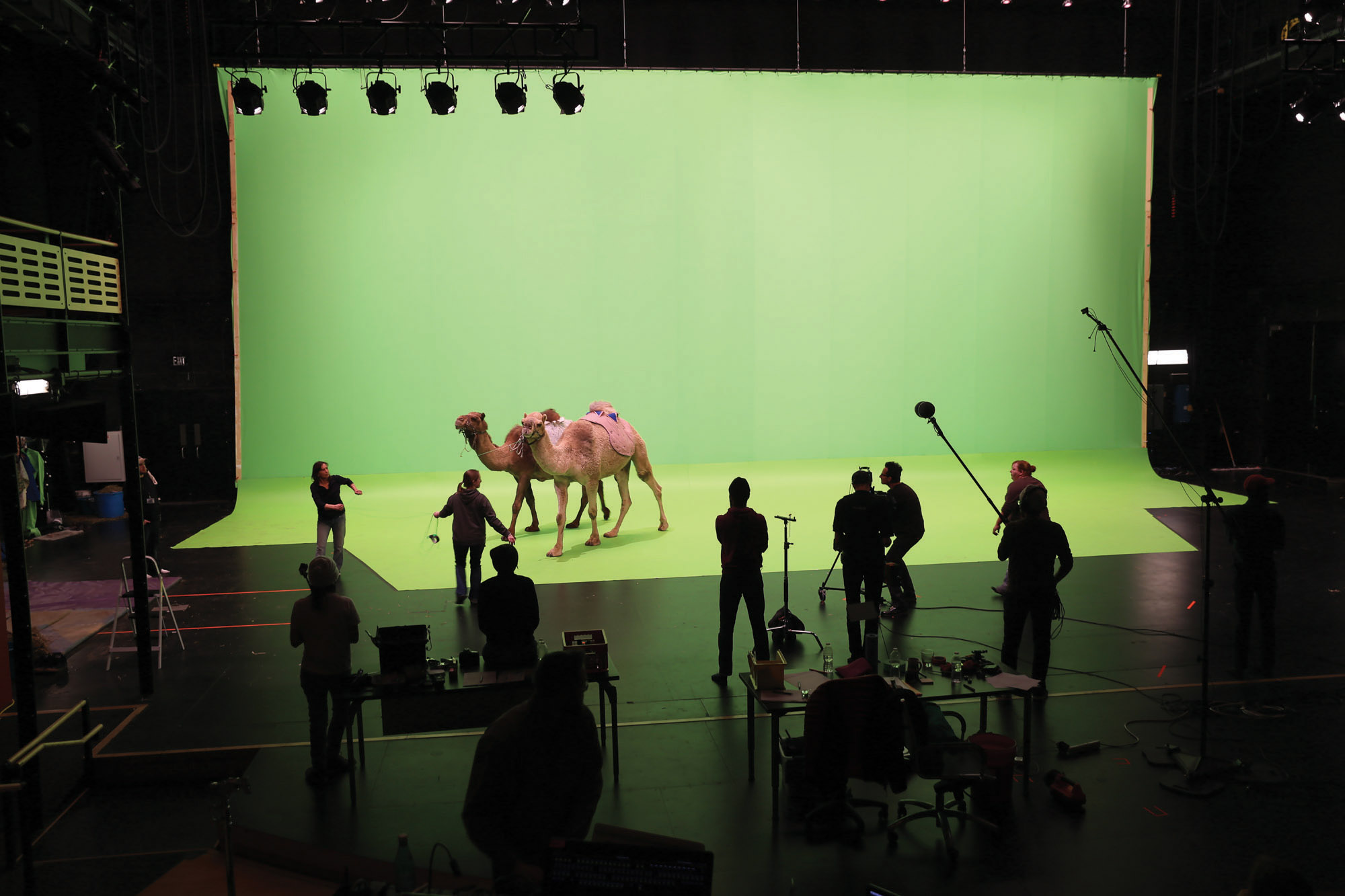 a camel against a giant green screen in the theater.
