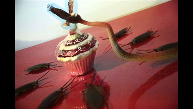 an eagle holding a snake attacking a cupcake.