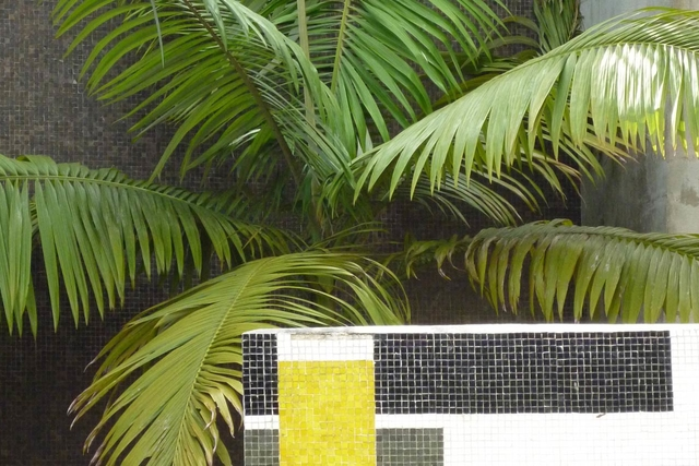 a fern against a grey tiled wall with a geometric tiled half wall in the foreground