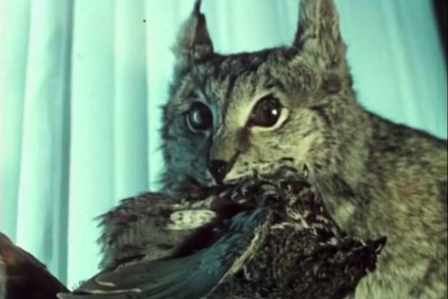 film still of a cat with bird in mouth